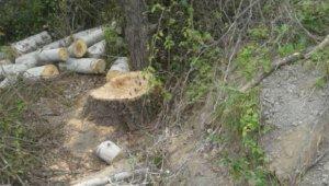 Sumqayıtda 7 ağac kəsildi
