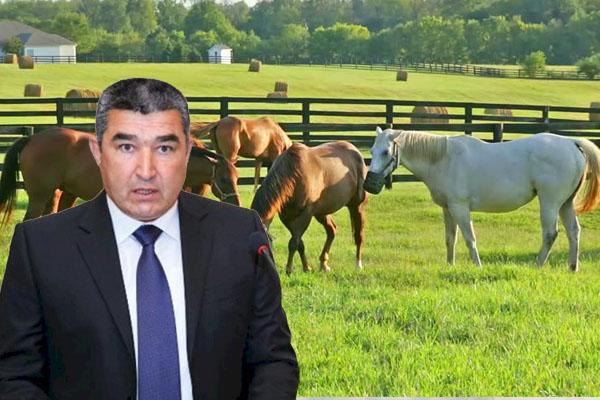 Etibar Pirverdiyev bahalı atlarını satdı… – gündə 300 manat xərcləyirmiş