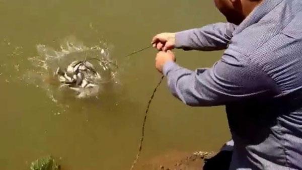 Nazirlik Neftçalada qanunsuz balıq ovu ilə bağlı hərəkətə keçdi