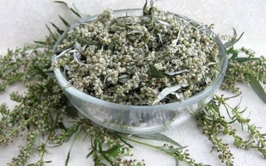 Azərbaycanda bitən bu bitki koronavirusun dərmanı ola bilər– ARAŞDIRMA…