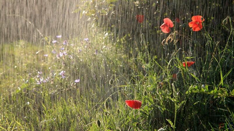 Bu gün yağış yağacaq, külək əsəcək